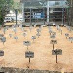 sri lanka tour itinerary - Kasgoda Turtle Hatchery - Turtle eggs being conserved