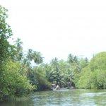Sri Lanka Tour Itinerary - Madu River Boat Ride through Mangroves - View 1