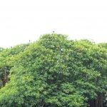 sri lanka tour itinerary - Madu River Boat Ride through Mangroves - View 13 - birds on top