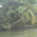 sri lanka tour itinerary - Madu River Boat Ride through Mangroves - View 17