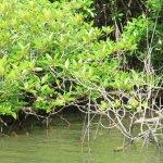 sri lanka tour itinerary - Madu River Boat Ride through Mangroves - View 19