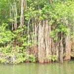 sri lanka tour itinerary - Madu River Boat Ride through Mangroves - View 20