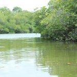 sri lanka tour itinerary - Madu River Boat Ride through Mangroves - View 4