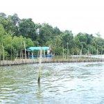 sri lanka tour itinerary - Madu River Boat Ride through Mangroves - View 6
